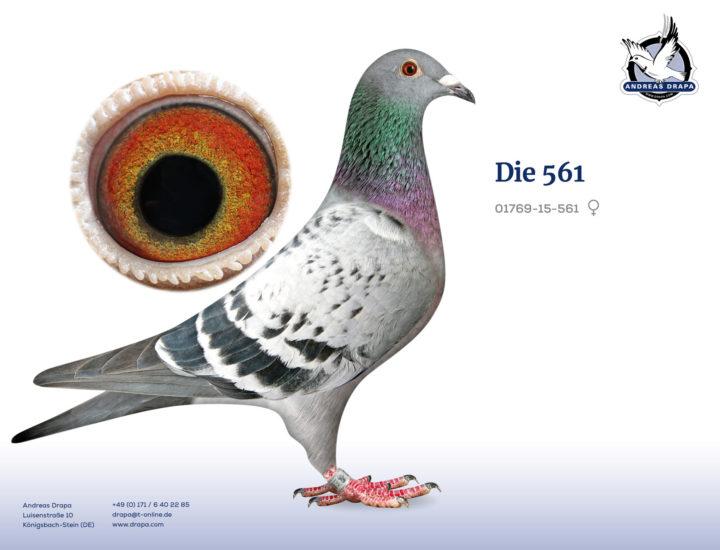 Die 561